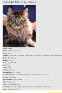 Pet FBI Found Cat Report