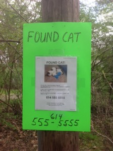 found cat flyer on neon poster
