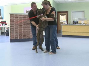 Dog with family after 10 yrs lost