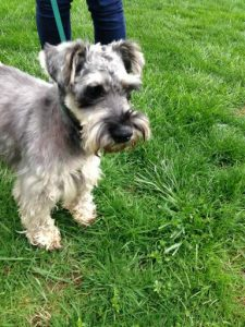 Dog Recovered Quickly