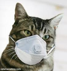 cat w mask